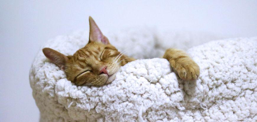 poate deprivarea de somn împiedică pierderea în greutate